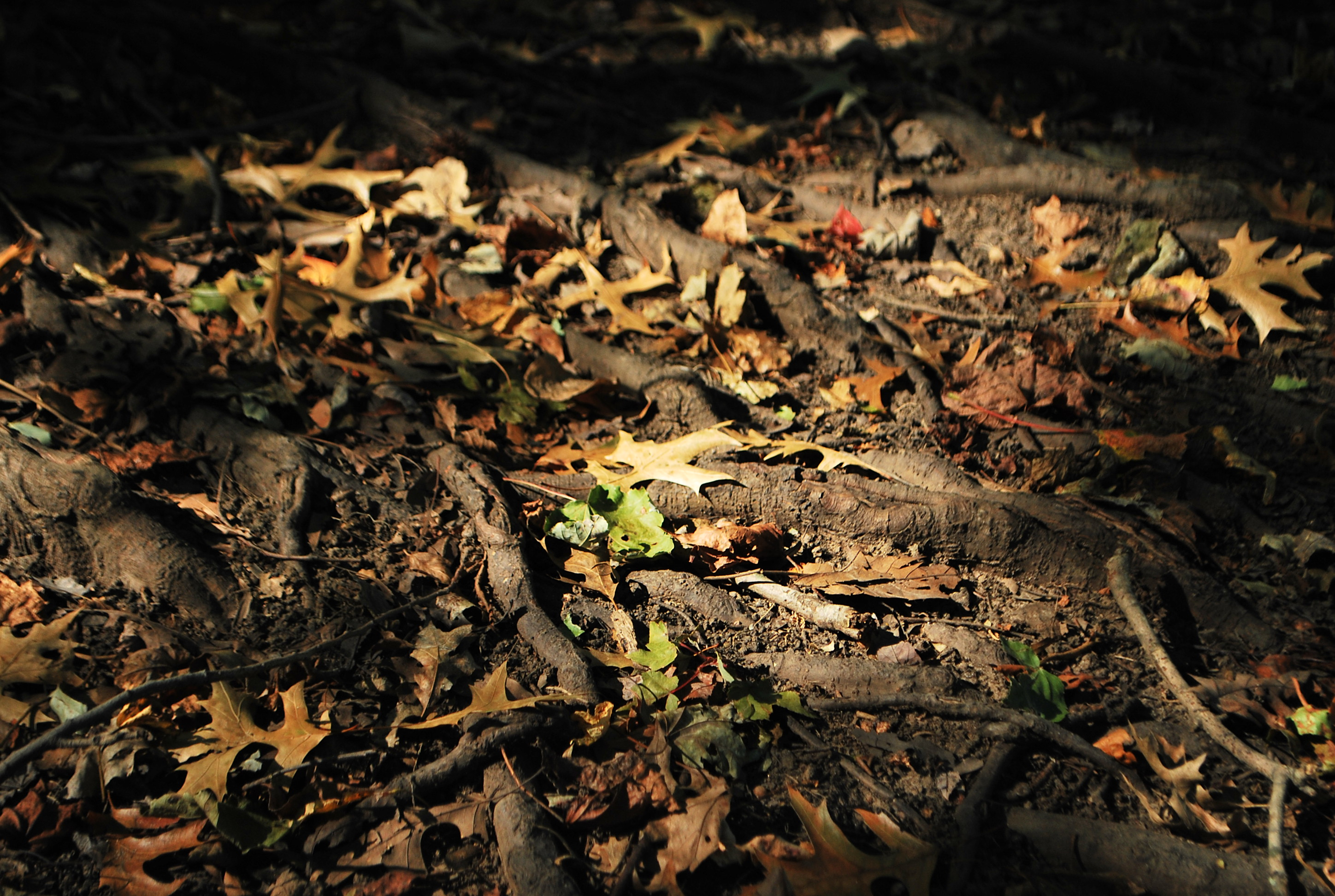 power | the reluctant bloger Dark Forest Floor Texture