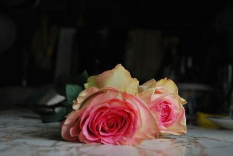 Reception Rose